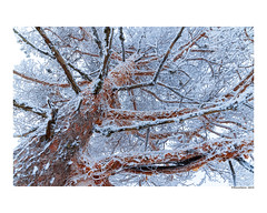 #davidramalleira (david Ramalleira) Tags: davidramalleiraphotography davidramalleira d700 nikon snow winter tree trees nature naturaleza natureart naturephotography naturesfinest naturesart natura nieve invierno