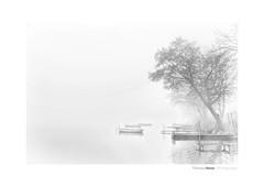 Nebel am See (Der Zeit die Augenblicke stehlen) Tags: thomashesse landscape landschaft wasser see boote bäume trees water schleswigholstein groserplönersee holsteinischeschweiz deutschland