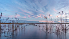 Walk on water (Rob Schop) Tags: f11 wideangle landscape sunset sonya6000 water nederland outdoor ridderkerk clouds groothoek crezeepolder pathway hoyafilters pola samyang12mmf20 colours a6000 zonsondergang hightide pink