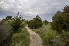 Basin Trail