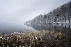 reeds in winter (akh1981) Tags: manfrotto mountains moody landscape lakedistrict lake nikon nisi nature wideangle walking water buttermere lakeside travel trees tranquil cumbria clouds calm