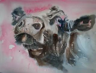 Cow sketching