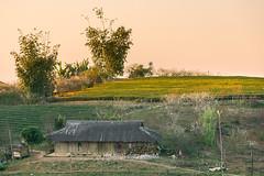 _Y2U0925.0118.Pa Khen.Tân Lập.Mộc Châu.Sơn La (hoanglongphoto) Tags: asia asian vietnam northvietnam landscape scenery northwestvietnam vietnamlandscape vietnamscenery vietnamscene hdr village house home afternoon sunny sunnyafternoon hill tophill hillside bambo teahill canon canoneos1dx canonef70200mmf28lisiiusm tâybắc sơnla mộcchâu tânlập pakhen bảnlàng buổichiều nắng nắngchiều bầutrời sky ngôinhà ngọnđồi đỉnhđồi sườnđồi đồichè bụitre