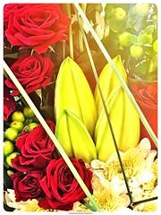 b o u q u e t (NadzNidzPhotography) Tags: nadznidzphotography 7dwf flora fridays flower flowers rose red yellow bouquet