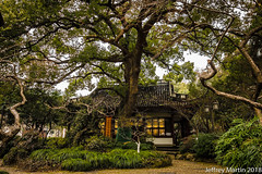 (Dubai Jeffrey) Tags: china hangzhou yuewangtemple architecture building large massive temple tree westlake 岳王庙