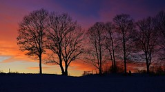 Sunset & Silhouettes (RWGrennan) Tags: sunset silhouette trees fence clouds newyork ny upstate nikon d610 wow sky color fire beautiful nassau farm nature outdoors light rwgrennan rgrennan ryan grennan earth explore planet inspire landscape winter view photography usa love rensselaer county
