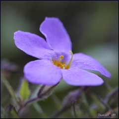 P1005730_b (daniellelallemand) Tags: fleur proxy lumixg9
