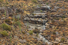DSC_0032 saguaro east waterfall 850 (guine) Tags: saguaronationalpark saguaro cactus plants rocks water waterfall