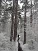 Winter Zima 2018 Baden bei Wien (arjuna_zbycho) Tags: zima winter badenbeiwien kurstadt luftkurort austria stadt city miasto thermenregion biosphaerenparkniederösterreich österreich rakousko wienerwald doblhoffpark rosengarten flussschwechat rzekaschwechat undinebrunnen badenerkurpark brunnenanlage brunnen wassernympheundine kurpark ella