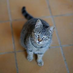Ella (mike828 - Miguel Duran) Tags: gato gata cat animal silvestre libre free sony alpha a6300 kamlan 50mm f11 dof
