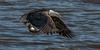 SEA--7 (shane422) Tags: eagles ld14 leclaire nature