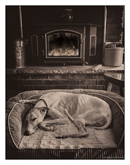 Buddy - Skinny Old Man (GAPHIKER) Tags: dog whippet buddy fireplace dogbed bed sleeping old skinny happyslidersunday hss warm fire woodburing stove insert littledoglaughednoiret