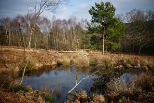 Pond, Ashdown Forest
