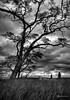 Troubled Sky (James Korringa) Tags: clouds sky tree ominous