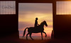 Day 12 of 365 (Christina Draper) Tags: equine 365project 365 horse sillhuette pony sun canter backlight rider equestrian