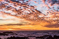 2018-Jan-California-488 (4x4Foto) Tags: 2018 bigsur california deetjensrestaurant emeraldbay january montereybay pacificcoasthighway pacificgrove pacificocean southlaketahoe flowers ocean plants rocks sunset sunshine surf surfing travel trees waves virginia unitedstates