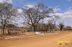 BoA 画像5