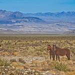 High Desert Horses 5145 B thumbnail