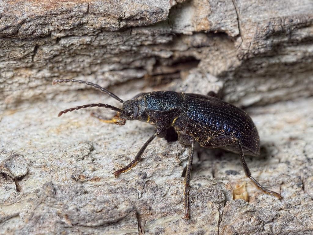 phylum arthropoda Phylum arthropoda arthorn แปลว่า ข้อต่อ และ podos แปลว่า เท้า (ภาพ trilobite เป็นบรรพบุรุษของ พวกarthropods.