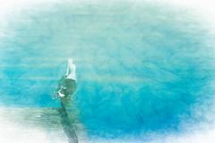 Together (Sarah Fraser63) Tags: seagulls textures topaztexture