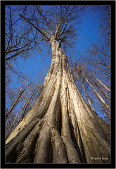 A7R, Leica Tri-Elmar-M 16-18-21/4 @ 16mm (Dierk Topp) Tags: a7r bäume ilce7r leica leicatrielmarm161821 leicatrielmarm1618214 nature sony trees wald wood