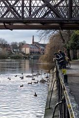 Along the river (jayneboo) Tags: leica cl voigtlander 35mm 12ii river swans ducks signets water severn