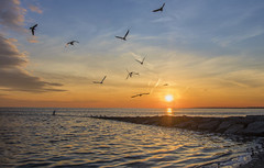 Sunsets going to the birds... (Melanie Bradley) Tags: seagulls sunset connecticut longbeach stratford