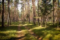 *** (pszcz9) Tags: przyroda nature natura las forest forestimages jesień autumn fall beautifulearth sony a77 droga road pejzaż landscape poland polska