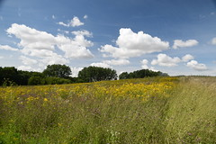 Meadow (Worthing Wanderer) Tags: norfolk summer sunny farmland coast seaside nelson holkham burnham hero august