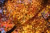 20171210-DS7_4831.jpg (d3_plus) Tags: building d700 street 日常 walking architecturalstructure 建築物 sightseeing 景色 ancientcity trekking history sky 寺院 風景 temple streetphoto ハイキング shintoshrine 8020028 architectural 散歩 nikond700 地形 scenery 80200 ストリート 秋 歴史 landscape nature 聖地 shrine 路上 望遠 自然 holyplace sanctuary autumnfoliage japan autumn dailyphoto historicmonuments 80200mmf28d トレッキング nikon 80200mmf28af 80200mmf28 aiafzoomnikkor80200mmf28sed 路上写真 fall 歴史的建造物 寺 buddhisttemple hiking daily 神社 紅葉 telephoto 観光 80200mm ニコン 空 日本 tele 古都 nikkor thesedays