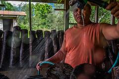 USAID Measuring Impact Conservation Enterprise Retrospective (Philippines; Kalahan Educational Foundation) (USAID Biodiversity & Forestry) Tags: conservationenterpriseretrospective kef kalahaneducationalfoundation measuringimpact measuringimpactconservationenterpriseretrospective ntfp philippines usaid conservation conservationenterprise enterprise nontimberforestproducts imugan nuevavizcaya pe