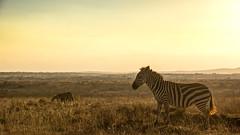 Nairobi-Nationalpark-1924 (ovg2012) Tags: kenia kenya nairobi nairobinationalpark