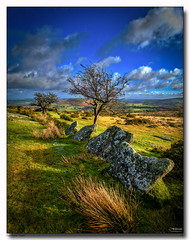 Dartmoor Trees (jeremy willcocks) Tags: dartmoortrees dartmoor devon ukjeremywillcocksc2018fujixpro2xf1024mm trees moor uk stones sky sun sunny reeds frenchbeer landscape colour portrait wwwsouthwestscenesmeuk