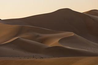 Golden Morning Light on the Dunes