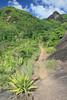 Seychelles - Mahé (Michael.Kemper) Tags: voyage travel travelling reise canon eos 30d efs 1755 f28 is usm canoneos30d canonefs1755f28isusm seychelles seychellen mahé mahe anse major ansemajor nature trail hike hiking wanderung wandern randonnée randonnee granit granite rock rocks fels felsen tropen tropisch tropics tropic tropical green grün danzil bel ombre morne seychellois national park np nationalpark indischer ozean indian ocean indean
