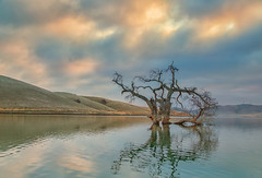 (Marc Crumpler (Ilikethenight)) Tags: usa california bayarea sfbayarea eastbay contracostacounty losvaqueros marccrumpler tree reflection sunrise hills clouds water lake canon canon6d 6d 24105mmf4lisusm ccwd contracostawaterdistrictdistrict