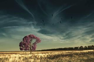 'Wispy Skies beyond the naked eye'