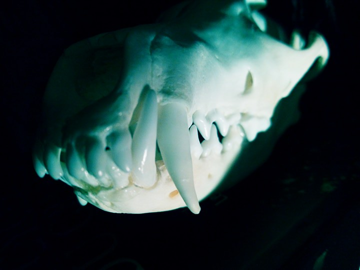 The Worlds Newest Photos Of Anatomy And Skull Flickr Hive Mind