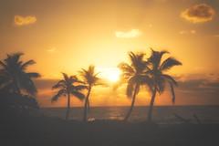 Foggy_Day_Sunrise (Jpnowak) Tags: beach sunrise mexico vacation mayan riviera air fog aurorahdr hdr palm smooth meksyk