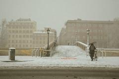 ponte sisto innevato (freedoog) Tags: neve roma vaticano tiber tevere fiume pupazzo biciclette santa maria closcard punk bestia cani palle di bianco trilussa ponte sisto porta settimiana usa america