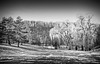 Willows in the Park B&W (otterman51) Tags: bw canada grimsby landscape ontario ortbaldauf park tree blackandwihite cold conifer escarpment field nature niagara niagaraescarpment ortbaldaufcom outdoors photography snow sunlight sunset wildlife willow winter