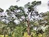 Miramar Pineland Park 09-20180120 (Kenneth Cole Schneider) Tags: florida miramar miramarpinelandpark