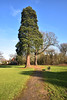 Eastcote Cricket Club (James Mans) Tags: nikon d5500 eastcote uk england green trees park sunshine sun winter blue sky haydon hall cricket club grass tree foliage