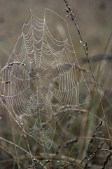 spiderweb (Maryland DNR) Tags: wildlife southernmaryland spiderwebs