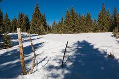 meadow (Tomás Harrison Fotos) Tags: windsortrail hiking afsdxzoomnikkor1755mmf28gifed nikon d7100 skibasin landscape availablelight mountains snow meadow aspen santafe nm spruce austin tx usa