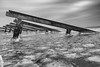 MW4_4867-bewerkt (Matty Wientjes) Tags: 2018 ijsselmeer marken ijs ijsbrekersmarken