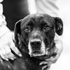 Honey27Jan201814-Edit.jpg (fredstrobel) Tags: dogs pawsatanta phototype atlanta blackandwhite usa animals ga pets places pawsdogs decatur georgia unitedstates us