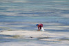 Zanzibar (Don César) Tags: africa tanzania tansania zanzibar woman mujer people work seaweed algas african sea beach playa mar lowtide marea baja agua water whitesand contrast colors cheer