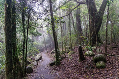 Track to Best of All Lookout (palbion) Tags: springbrook queensland australia au