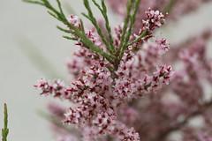 Flowers (kimsfotos) Tags: roses columbine garden red yellow blue peach white pink purple dahlia daisy gebera lily lilac peony violet 21414